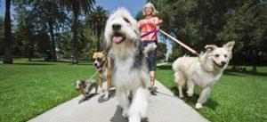 http://media.nbcphiladelphia.com/images/1479*675/dogwalker2.jpg